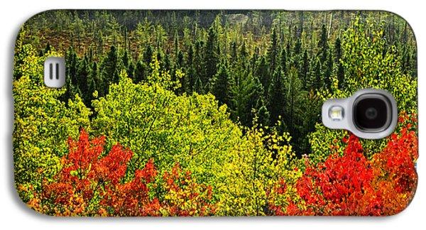 Fall Forest Rain Storm Galaxy S4 Case by Elena Elisseeva