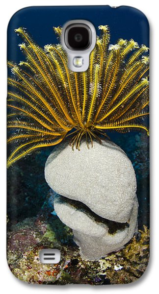 Feather Star On Rainbow Reef Fiji Galaxy S4 Case by Pete Oxford
