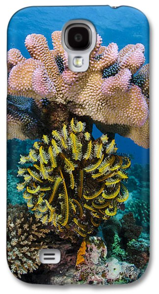 Feather Star Rainbow Reef Fiji Galaxy S4 Case by Pete Oxford