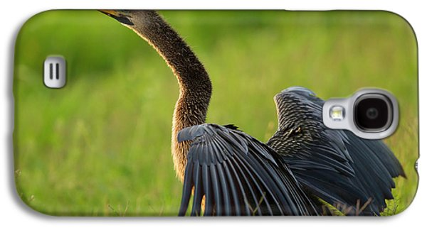 Female Anhinga Drying Out Wings Galaxy S4 Case