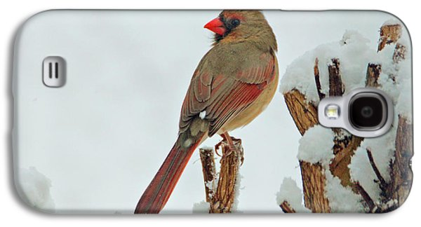Female Cardinal In The Snow Galaxy S4 Case