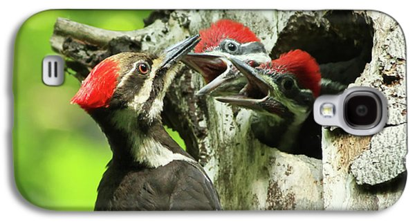 Female Pileated Woodpecker At Nest Galaxy S4 Case by Mircea Costina Photography