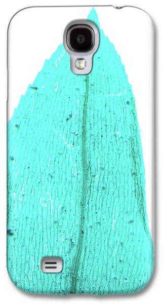 Fern Prothallus Galaxy S4 Case