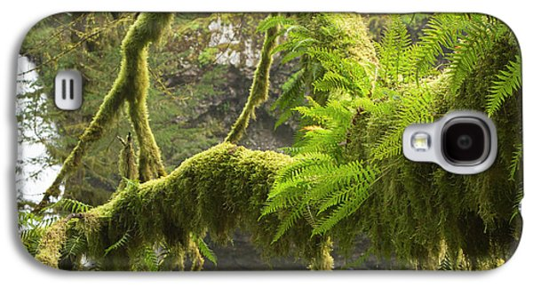 Ferns And Moss Growing On A Tree Limb Galaxy S4 Case