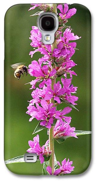 Final Approach - Bee On Purple Loosestrife Galaxy S4 Case by Gill Billington