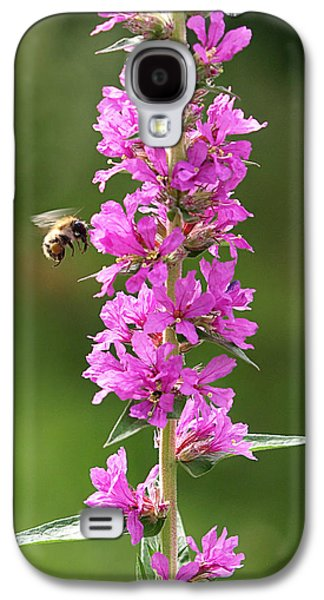 Final Approach - Bee On Purple Loosestrife Galaxy S4 Case