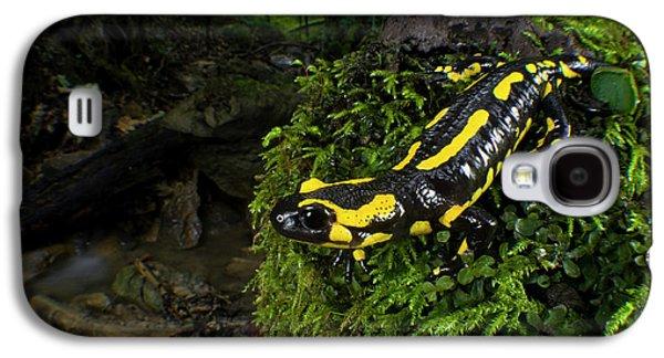 Salamanders Galaxy S4 Case - Fire Salamander (salamandra Salamandra by Andres Morya Hinojosa