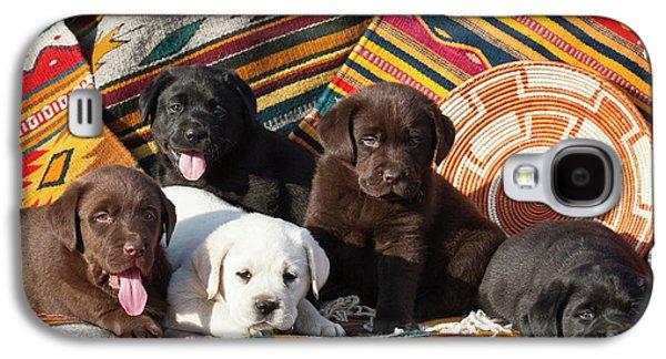 Five Labrador Retriever Puppies Of All Galaxy S4 Case