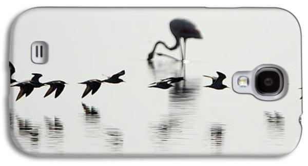 Flamingos In A Lake, Lake Manyara Galaxy S4 Case by Panoramic Images
