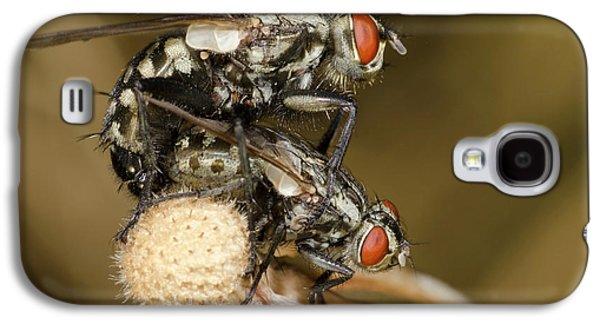 Flesh-flies Mating Galaxy S4 Case by Nigel Downer