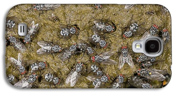 Flies On Cow Dung Galaxy S4 Case