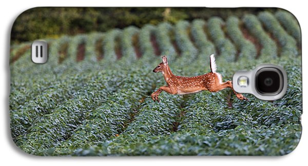 Flight Of The White-tailed Deer Galaxy S4 Case