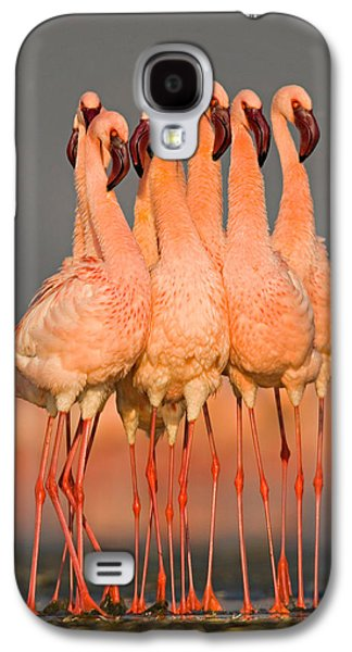 Flock Of Eight Flamingos Wading Galaxy S4 Case by Panoramic Images