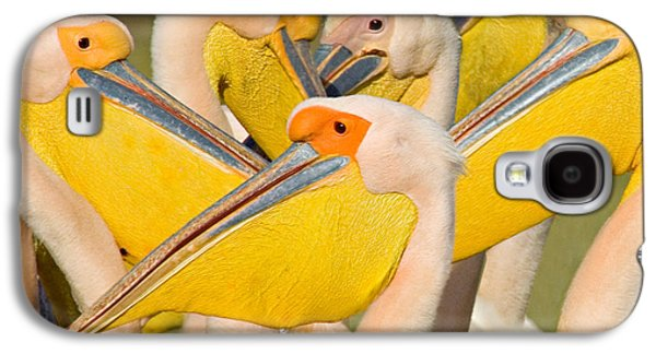 Flock Of Great White Pelicans, Lake Galaxy S4 Case by Panoramic Images