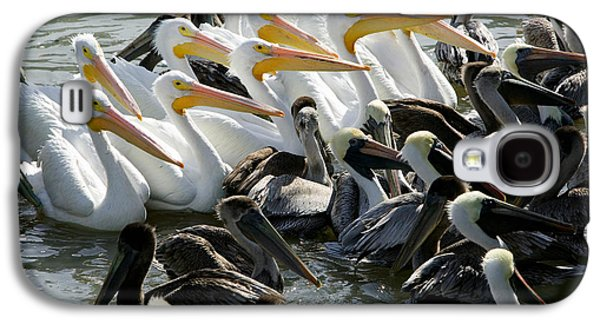 Flock Of Pelicans In Water, Galveston Galaxy S4 Case by Panoramic Images