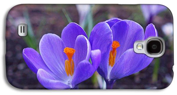 Floral Garden Purple Crocus Flower Art Prints Galaxy S4 Case by Baslee Troutman