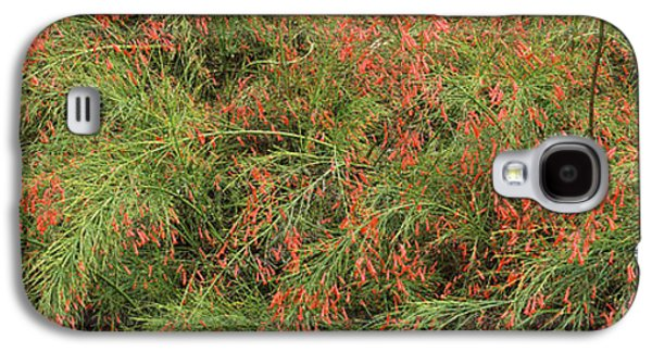 Flowers On Coral Plants Russelia Galaxy S4 Case by Panoramic Images