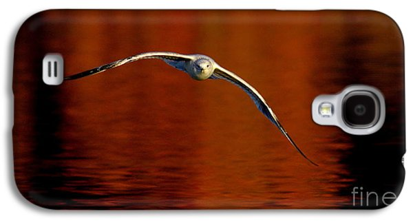 Flying Gull On Fall Color Galaxy S4 Case by Robert Frederick