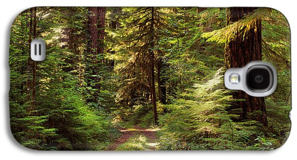 Forest Path 4 Galaxy S4 Case
