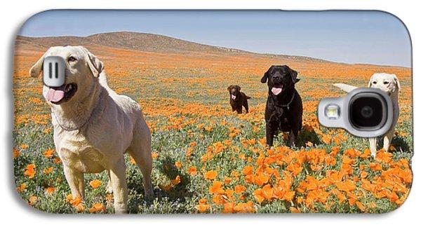 Four Labrador Retrievers Standing Galaxy S4 Case