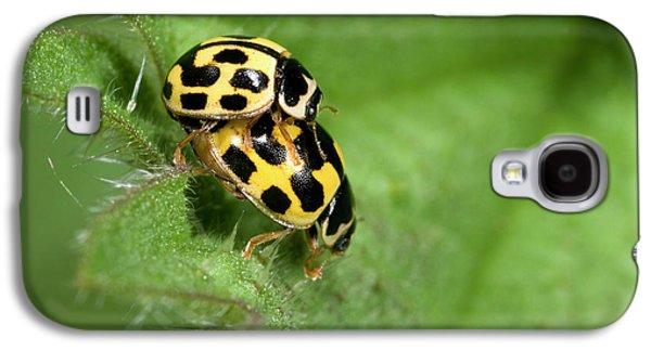 Fourteen-spot Ladybirds Galaxy S4 Case by Nigel Downer