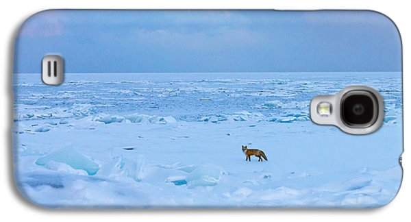 Fox Of The North Country Iv Galaxy S4 Case by Mary Amerman