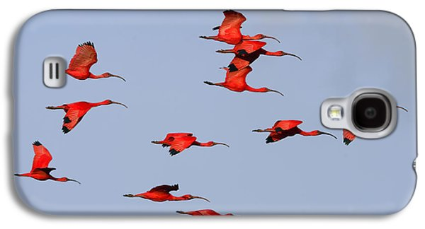 Frankly Scarlet Galaxy S4 Case by Tony Beck