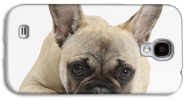 French Bulldog Galaxy S4 Case by Mark Taylor
