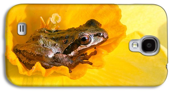 Frog And Daffodil Galaxy S4 Case by Jean Noren