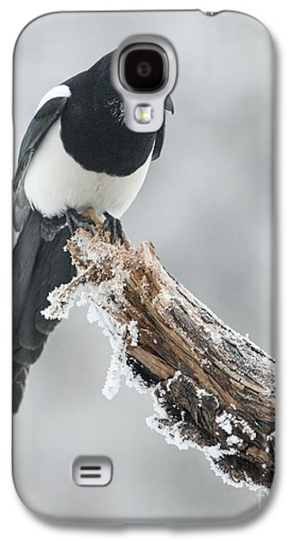Frosted Magpie Galaxy S4 Case by Tim Grams