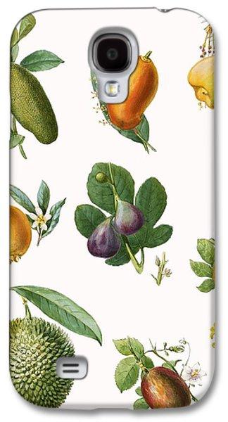 Fruit Galaxy S4 Case by English School