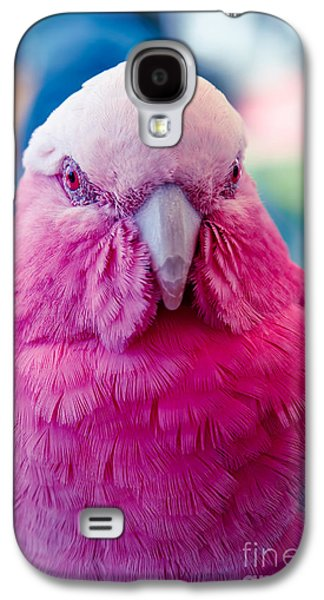 Galah - Eolophus Roseicapilla - Pink And Grey - Roseate Cockatoo Maui Hawaii Galaxy S4 Case by Sharon Mau