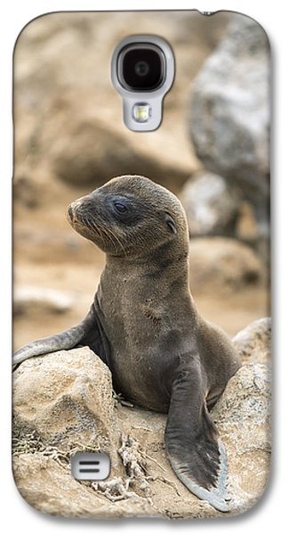 Galapagos Sea Lion Pup Champion Islet Galaxy S4 Case