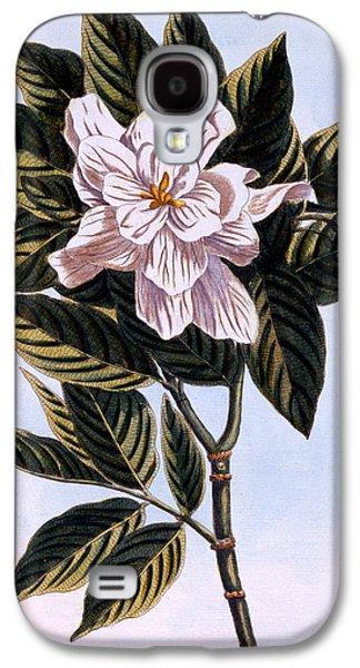 Gardenia G Augusta Galaxy S4 Case by Pierre Joseph Buchoz
