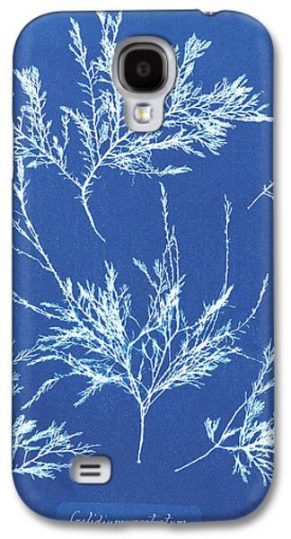 Gelidium Rostratum Galaxy S4 Case by Natural History Museum, London