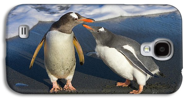 Gentoo Penguin Chick Begging For Food Galaxy S4 Case by Yva Momatiuk and John Eastcott