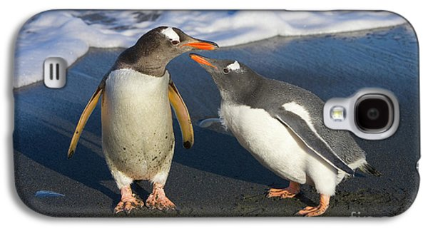 Gentoo Penguin Chick Begging For Food Galaxy S4 Case
