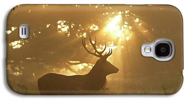 Sun Rays Galaxy S4 Case - Ghost Of The Forest by Greg Morgan