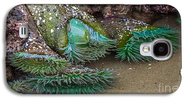 Giant Green Anemone Galaxy S4 Case