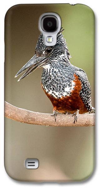 Giant Kingfisher Megaceryle Maxima Galaxy S4 Case by Panoramic Images
