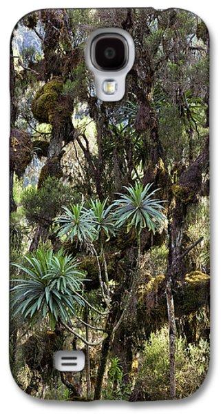 Giant Lobelia (lobelia Lanuriensis Galaxy S4 Case