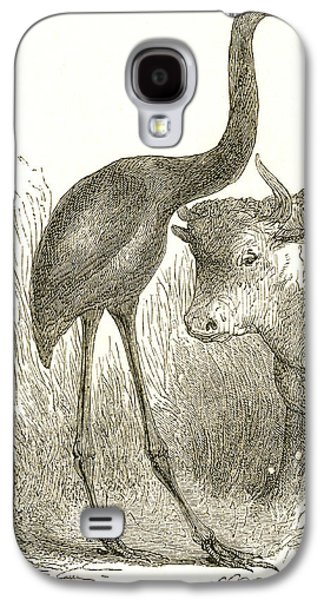 Giant Moa, Dinornis Galaxy S4 Case