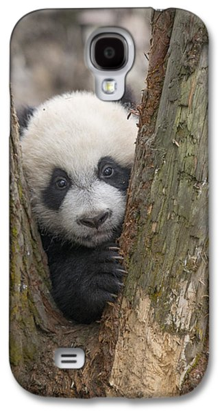 Giant Panda Cub Bifengxia Panda Base Galaxy S4 Case