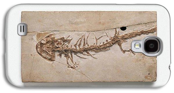 Salamanders Galaxy S4 Case - Giant Salamander Fossil by Dorling Kindersley/uig