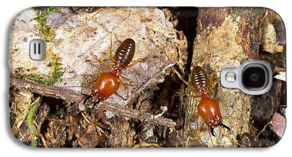 Giant Termites Galaxy S4 Case