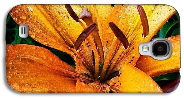 Orange Galaxy S4 Case - Gift From #mom #orange #lily #rainyday by Teresa Mucha