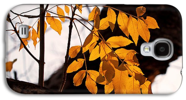 Golden Beech Leaves Galaxy S4 Case