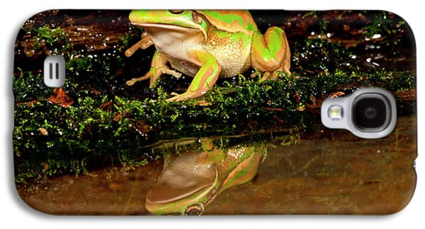 Golden Bell Treefrog, Litoria Aurea Galaxy S4 Case