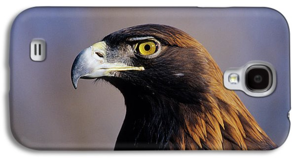 Golden Eagle (aquila Chrysaetos Galaxy S4 Case by Richard and Susan Day