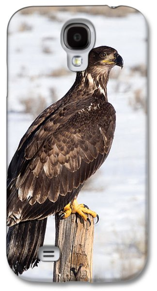 Golden Eagle On Fencepost Galaxy S4 Case